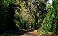 Dufferin Avenue, Strangford - geograph.org.uk - 1562782.jpg