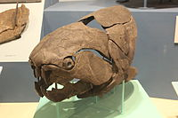 Dunkleosteus at Cleveland Museum of Natural History small.jpg