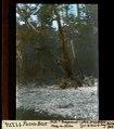 ETH-BIB-Puerto Blest, 1898er Campament, Platz im Delta-Dia 247-11374.tif
