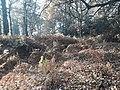 Earthwork enclosures, Oare Common, Berkshire 10.jpg
