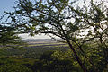 Eastern Serengeti 2012 05 31 2996 (7522611998).jpg