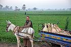 Egyptian farm