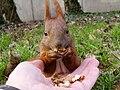 Eichhörnchen Bauch streicheln.jpg