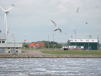 Environmental impact of wind power -  Arctic terns and a wind turbine at the Eider Barrage in Germany.