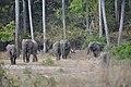 Elephants I (15060901612).jpg