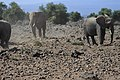 Elephants of Kenya 47.jpg