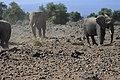 Elephants of Kenya 47.jpg