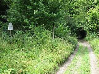 Selborne Common