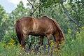 Equus SNY01712 (51317457471).jpg