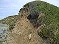 Erosion of the boulder clay cliffs on the north side of Traeth Trefadog - geograph.org.uk - 1406693.jpg