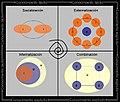 Espiral de conocimiento.jpg