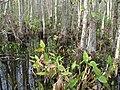 Everglades R03.jpg