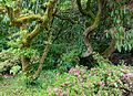 Exbury Gardens - Exbury, England - DSC04005.jpg