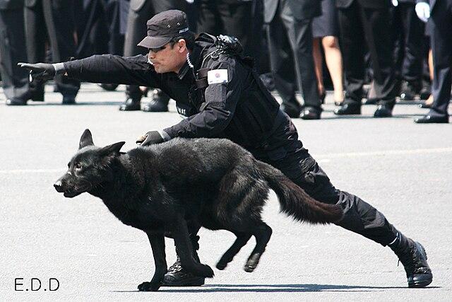Remote Control Dog Training Collar