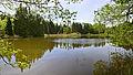 FFH-BW-RV-Altdorfer Wald-NWL-4.jpg
