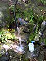 FLT M31 8.15 mi - Piped spring next to trail near Alder Lake - panoramio.jpg