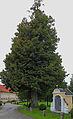 Fadinger-Linde beim Fadingerhof in Parz 2014-08 nd 233.jpg
