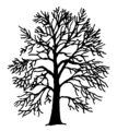 Fagus sylvatica Silhouette (oddsock).png