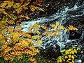 Fall Leaves at Tischer Creek, Duluth (266828749).jpg