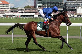 Farhh British Thoroughbred racehorse