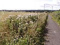 Farm Track - geograph.org.uk - 45327.jpg