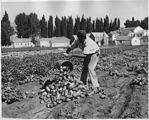 Duckwater Shoshone Tribe of the Duckwater Reservation - John Billy (Paiute) farming at Duckwater Reservation in the 1930s