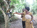 Feeding Mona Monkeys at Tafi Atome Monkey Sanctuary 01.jpg