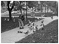 Feeding the pigeons again... (53701515).jpg