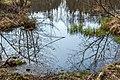 Feldkirchen Dietrichstein Dietrichsteiner See N-Ufer junges Schilfrohr 04042020 7426.jpg