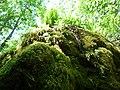Fern and moss - panoramio (1).jpg