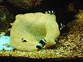 Fishes at Nandankanan Zoological Park, Bhubaneswar, Odisha, India.jpg