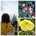 Flickr - USCapitol - Plants enjoying rainy days in ^dc at the US Botanic Garden..jpg