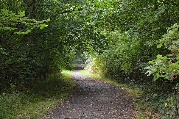 Flitwick Wood