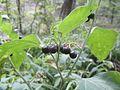 Flora în Rezervația Științifică Codrii.jpg