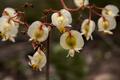 Flores da trilha do Mirante do Caim - Igatu 12.png