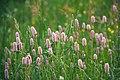 Flores silvestres (8277296300).jpg