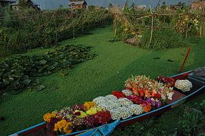 Shikara - A Florist's Shikara on Nageen Lake, Srinagar, Jammu & Kashmir, India