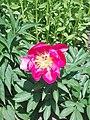 Flower Dortmund 14.jpg