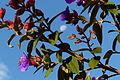 Flower in Horton Plains with Moon.jpg