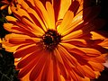 Flower photography - Photo by Giovanni Ussi 48.jpg