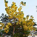 Flower tree 1.jpg