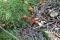 Flowerpot Island, Ontario - Laslovarga (24).jpg