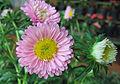 Flowers (179).jpg