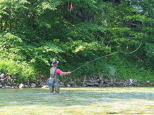 Fly fishing - Fly fishing in a river