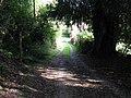 Footpath junction near large Yew tree - geograph.org.uk - 1531685.jpg