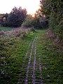 Footpath near Appledown Drive - geograph.org.uk - 1069993.jpg