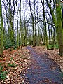 Footpath through wood looking towards disused railway line - geograph.org.uk - 652753.jpg