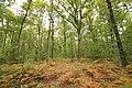 Forêt Départementale de Méridon à Chevreuse le 29 septembre 2017 - 22.jpg