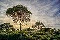 Forêt de Canastel.jpg