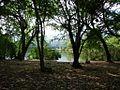 Forêt de lEtang Saint Paul (3847453281).jpg